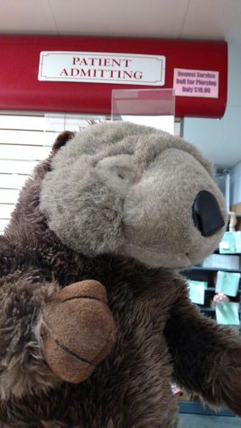 Ms. Reno's Beaver Missing Over Thanksgiving Weekend